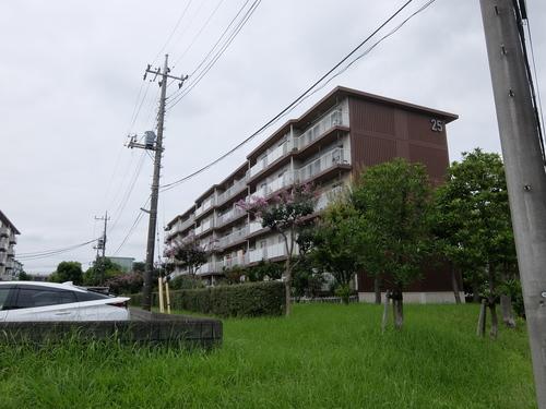 東新井団地25号棟の画像