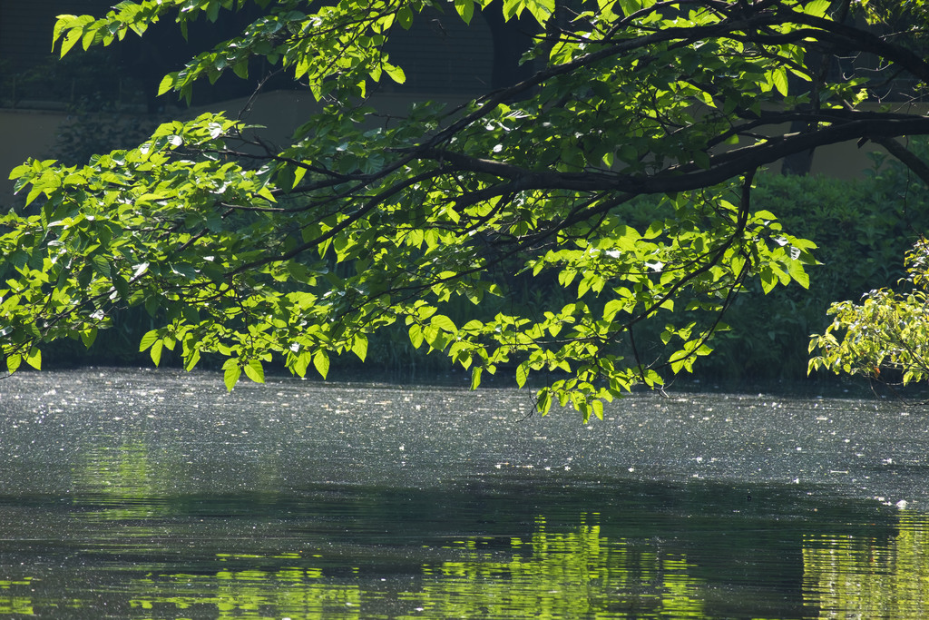 緑豊かな和田掘公園。(徒歩5分) 自然を身近に感じる事ができ、公園には珍しいバーベキュー場もあります。週末の遊び場に困らない公園です。